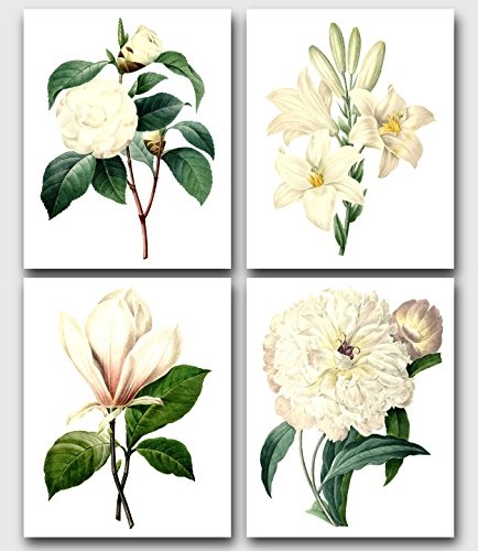 (Set of 4 Botanical Prints, White Camellia, Madonna Lily, Magnolia, Peony, 8x10 Inches, Unframed)