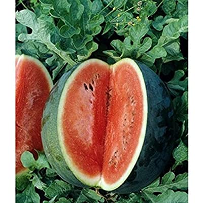 'Florida Giant' Watermelon - Beautiful 30-50 pound melons! A true Giant!!!!!(25 - Seeds) : Garden & Outdoor