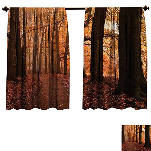 fengruiyanjing-Home Blackout Living Room/Bedroom Window Curtains Canopy Fall Season Hiking Walkway Enchanted Forest Blackout 2 Panels (W55 x L63 -Inch 2 - Canopy Sleeves