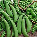 Organic Heirloom Super Sugar Snap 50+ Vegetable Seeds