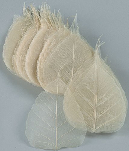 - Skeleton Leaves - Bleached Aspen (Peepul) White 4in. Long 4in. Wide 100 per bunch -- Single Bunch