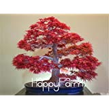 Japanese Red Maple Bonsai Tree Cheap Seeds, mini bonsai Seeds, 50 Seeds 11 kinds mixed, Very Beautiful Indoor Tree,#BR3KL 7
