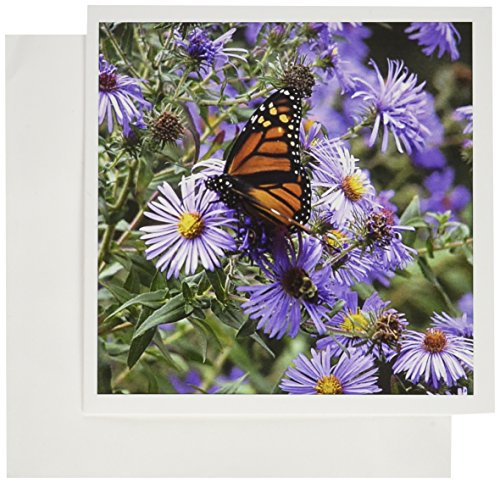 3dRose Greeting Cards, Butterfly Flowers Monarch Orange Purple, Set of 6 (gc_27269_1) ()