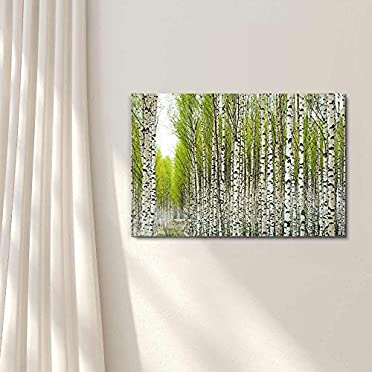 """Canvas Wall Art Prints Birch Trees with Fresh Green Leaves in Spring-12/"""" x 18/"""""""