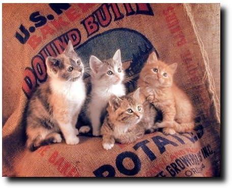 Amazon Com Funny Cat Wall Decor Gunnie Sack Cute Kittens Kids Room Animal Art Print Poster 16x20 Posters Prints,Standard House Brick Dimensions Australia