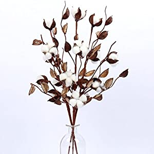 "Cotton Stems - 24""-30"" Tall - Cotton Buds/Bolls Farmhouse Style Natural Real Elastic Cotton Stalk Rustic Floral Display Filler Wedding Centerpiece for Home Wall Or Table Decor 48"