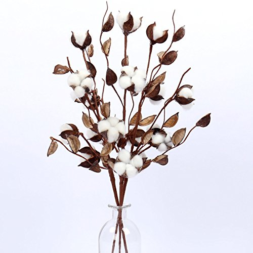 "WMAOT Cotton Stems - 24"" Tall - 5 Cotton Buds/Stem Farmhouse Style Real Elastic Cotton Stalk Rustic Floral Display Filler (Pack of 3)"