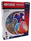 4D Master Human Anatomy Model Heart - 31 Part
