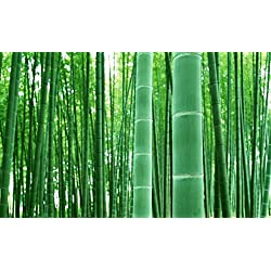 HOT! 50pcs/bag Moso Bamboo seeds Phyllostachys heterocycla Pubescens-Giant Moso Bamboo Seeds for DIY Home Garden Plant