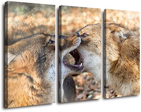 2 Big Wolves in the Fight and Bite Each Other Side the National Wolf Totem sSpirit Forest Wolf Animal Home Wall Art Pictures for Living Room Wolf Bite