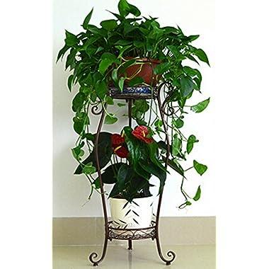 Dazone® Demountable Metal 2 Tiers Plant Rack Indoor Floor Model Potted Plant Stand (Bronze)