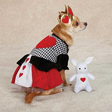 Casual Canine Queen Of Hearts Alice In Wonderland Type Halloween Dog Costume with White Rabbit Bunny & Amazon.com : Casual Canine Queen Of Hearts Alice In Wonderland Type ...