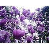 semi 10pcs / bag semi di fiori di rara bellezza Semi Yulan fiori, semi di magnolia