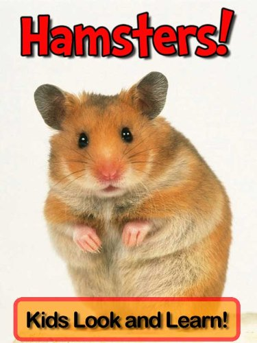 Pichers of hamsters