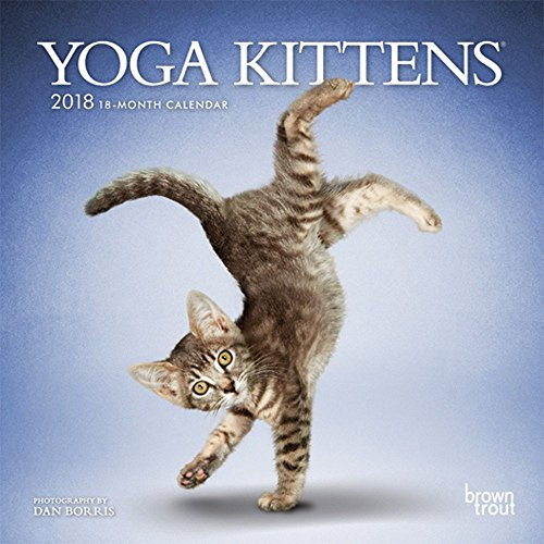 Yoga Kittens 2018 7 x 7 Inch Monthly Mini Wall Calendar, Animals Humor Kitten (Multilingual Edition) (Yoga Cat Calendar)