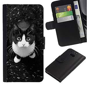 KingStore / Leather Etui en cuir / HTC One M8 / Shorthair Cat Housecat