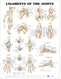 #8: Ligaments of the Joints Anatomical Chart