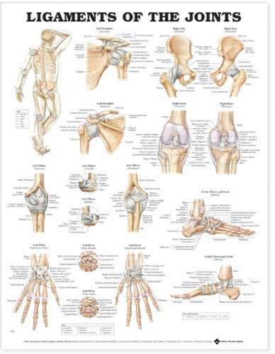 Ligaments of the Joints Anatomical Chart by Anatomical Chart Company