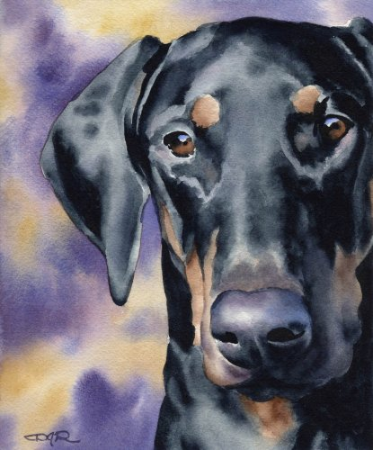 Doberman Pinscher Art Print by Watercolor Artist DJ Rogers