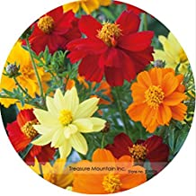 The Best Seller Heirloom Rare Imported USA perennial Coreopsis Cosmos Flower Seeds, Professional Pack, 100 Seeds / Pack, Very Beautiful.