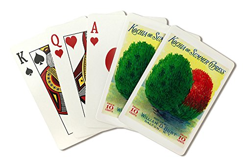 Kochia and Summer Cypress Seed Packet (Playing Card Deck - 52 Card Poker Size with Jokers)