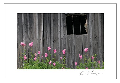 Pink Flowers Vermont Barn Postcard 10 Pack, 4x6. From the Barn Series. Unique Birthday Cards, Thank You Notes & Invitations. Best Quality Christmas & Valentine's Day Gifts for Women, Men and Kids.