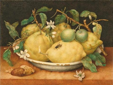 The Perfect Effect Canvas Of Oil Painting 'Still Life With Bowl Of Citrons, Late 1640's By Giovanna Garzoni' ,size: 20x26 Inch / 51x67 Cm ,this Imitations Art DecorativePrints On Canvas Is Fit For Gym Decor And Home Decoration And Gifts