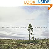 #7: The Oldest Living Things in the World