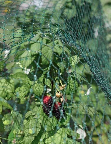 Red para pájaros, 138217; x 168217;: Amazon.es: Jardín