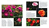 How to Grow Roses: A Comprehensive Illustrated