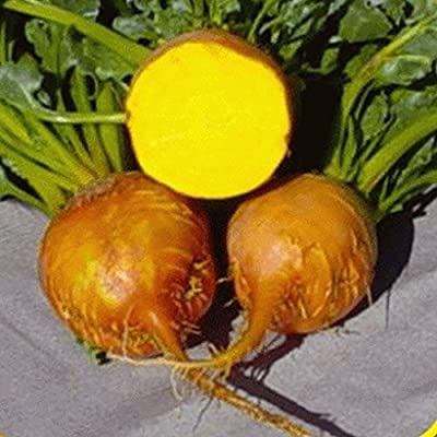 250 Burpee's Golden Beet Seeds