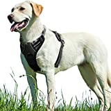 No Pull Dog Harness with Front Clip, Walking Pet Harness with 2 Metal Ring and Handle Reflective Oxford Padded Soft Vest for Small Medium Large Breed, Black, L