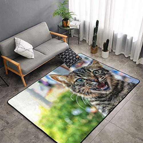 Jingclor Cool Cat Funny Pattern Area Rugs, Bedroom Living Room Kitchen Mat, Non-Slip Floor Mat Doormats Nursery Rugs, Children Play Throw Rugs Carpet Yoga Mat