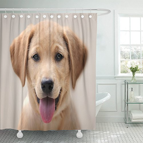 Emvency Shower Curtain Brown Lab Yellow Labrador Puppy Portrait Dog Eyes Waterproof Polyester Fabric 72 x 72 inches Set with Hooks