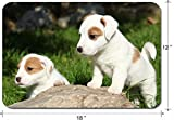Liili Large Mouse Pad XL Extended Non-Slip Rubber Extra Large Gaming Mousepad, 3mm thick Desk Mat 18x12 Inch IMAGE ID: 22745133 Gorgeous puppies of Jack Russell Terrier in the garden