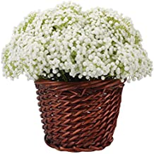 Duovlo Artificial Baby Breath Flower Gypsophila White For Wedding Home Decor Gift,Pack of 8 (NO BASKET)