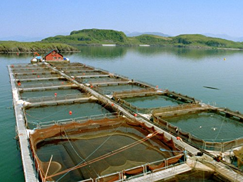 the-upside-of-fish-farms
