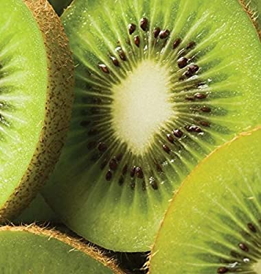 2000 KIWI FRUIT Actinidia Vine Seeds