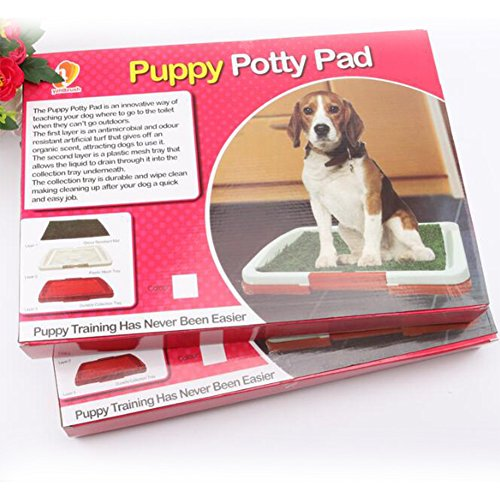 Review Accreate Pet Dog Toilet