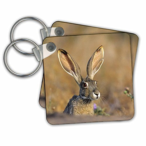 Danita Delimont - Rabbit - Black-tailed Jack Rabbit, Starr County, Texas - Key Chains - set of 2 Key Chains (kc_251477_1) (Keychain Jack Rabbit)