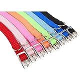 Adjustable Puppy Collar 12 Inch Neon Orange