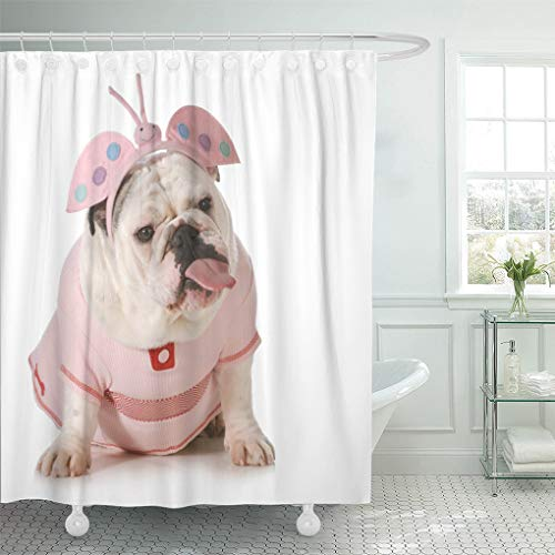 (Semtomn Bathroom Decorative Shower Curtain Blue Funny English Bulldog Wearing Butterfly Costume Attitude Pink 72x72 Inches Waterproof Bathroom Set with)