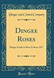 Amazon / Forgotten Books: Dingee Roses Dingee Guide to Rose Culture 1917 Classic Reprint (Dingee and Conard Company)