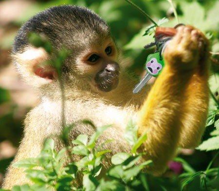 Fred Key Shirts MonKey Identifiers - Set of 6 Monkeys Photo #8