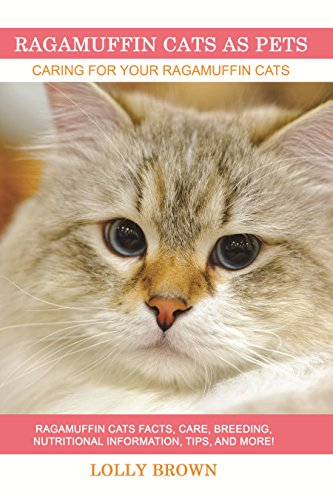 (Ragamuffin Cats As Pets: Ragamuffin Cats facts, care, breeding, nutritional information, tips, and more! Caring For Your Ragamuffin Cats)