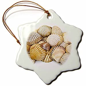 51vWs45ZUcL._SS300_ 100+ Best Seashell Christmas Ornaments