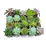 Succulent Plants (5 Pack), Fully Rooted in Planter Pots with Soil -  Real Live Potted Succulents / Unique Indoor Cactus Decor by Plants for Pets 22 HAND SELECTED: Every pack of succulents we send is hand-picked. You will receive a unique collection of species that are FULLY ROOTED IN 2 INCH POTS, which will be similar to the product photos (see photo 2 for scale). Note that we rotate our nursery stock often, so the exact species we send changes every week. THE EASIEST HOUSE PLANTS: More appealing than artificial plastic or fake faux plants, and care is a cinch. If you think you can't keep houseplants alive, you're wrong; our succulents don't require fertilizer and can be planted in a decorative pot of your choice within seconds. DIY HOME DECOR: The possibilities are only limited by your imagination; display them in a plant holder, a wall mount, a geometric glass vase, or even in a live wreath. Because of their amazingly low care requirements, they can even make the perfect desk centerpiece for your office.