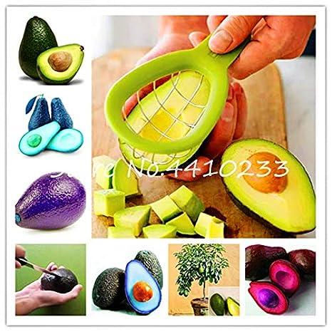 Bloom Green Co. Venta5 Piezas de bonsái, Aguacate, Dulce, Dulce ...