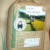 玄米 安心 れんげ米 熊本 5kg 2袋 減農薬 無化学肥料 農家直送 28年産