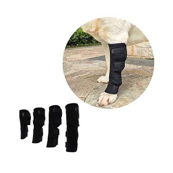 Dog-Knee-Pads